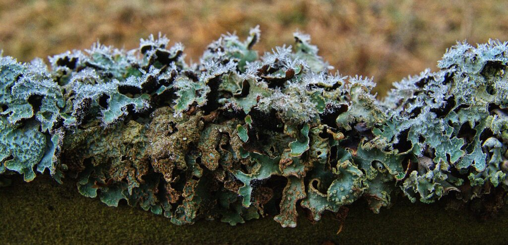 Lichens are symbiotic relationships between separate organisms. Think of your API customer relationship the same way.